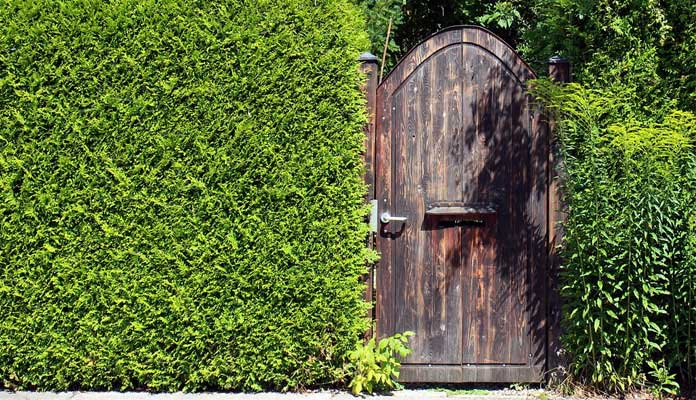 Add Privacy to your Garden in 5 easy ways!